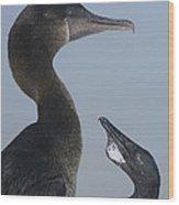 Flightless Cormorant And Chick Galapagos Wood Print