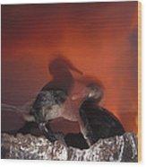 Flightless Cormorants And Volcanic Wood Print