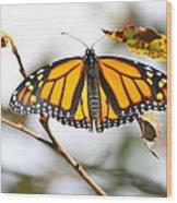 Flirting Monarch Wood Print
