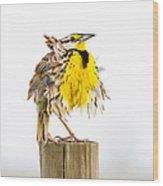 Flluffy Meadowlark Wood Print
