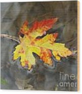 Floating Autumn Leaf Wood Print