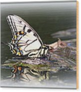 Floating In Water - Swallowtail -butterfly Wood Print