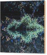 Floating Island Wood Print by Leif Sohlman