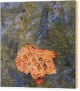 Floating Leaf Wood Print