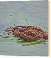 Floating On Green Wood Print