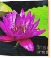Floating Purple Water Lily Wood Print