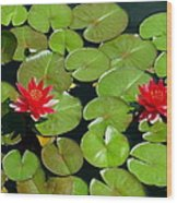 Floating Red Water Lilly Flowers On Pond Wood Print