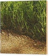 Floating Seeds-yosemite National Park Wood Print
