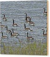 Flock Of Canada Geese   #7116 Wood Print