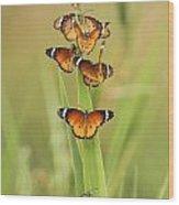 Flock Of Plain Tiger Danaus Chrysippus Wood Print