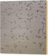 Flock Of Plovers Wood Print