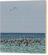 Flock Of Seagulls Wood Print