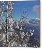 Flocked Pinon Wood Print
