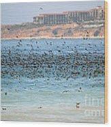 Flocking At Terranea Wood Print
