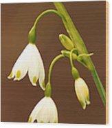 Flora 4 Wood Print