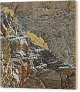 Flora In Sunlight In Big Painted Canyon Trail In Mecca Hills-ca Wood Print