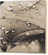Floral Close-up IIi Wood Print