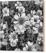 Floral Drama Wood Print