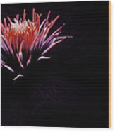 Floral Explosion  Wood Print