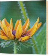 Floral Fuzz Wood Print