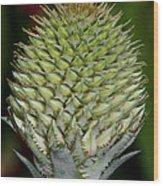 Floral Grenade Wood Print