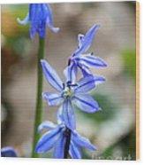Floral Ladder  Wood Print