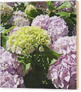 Floral Pink Lavender Hydrangea Garden Art Prints Wood Print