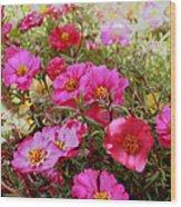 Floral Portulaca Garden Wood Print