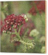Floral Prose Wood Print
