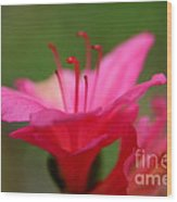 Floral Rosa Wood Print