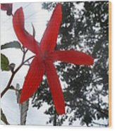 Floral Starfish Wood Print