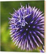 Floral Sticker Ball Wood Print by Alexandra  Rampolla