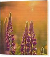 Floral Sunset Wood Print