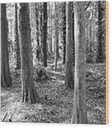 Florida 521 Years Ago Wood Print