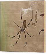 Florida Banana Spider Wood Print