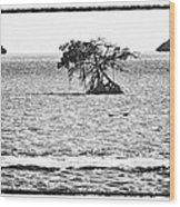 Florida Bay Wood Print