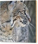 Florida Bobcat Wood Print