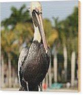 Florida Brown Pelican Wood Print