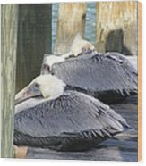 Florida Brown Pelicans Wood Print by Tracy L Teeter