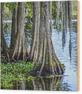 Florida Cypress Trees Wood Print