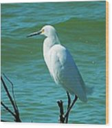 Florida Egret Wood Print