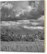 Florida Everglades 0184bw Wood Print by Rudy Umans