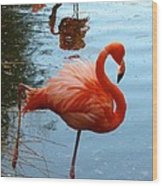 Florida Flamingo Wood Print