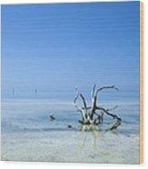 Florida Keys Lonely Root Wood Print