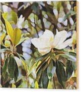 Florida Magnolia Wood Print