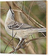 Florida Mockingbird Wood Print