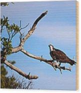 Florida Osprey Having Breakfast Wood Print