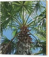 Florida Palm Tree Wood Print