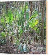 Florida Palmetto Bush Wood Print