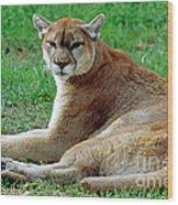 Florida Panther Wood Print